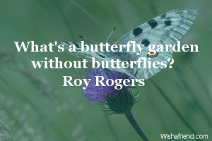 butterfly-What's a butterfly garden without butterflies?