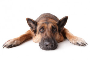 pets can be a wonderful addition to a family but saying good bye to a ...