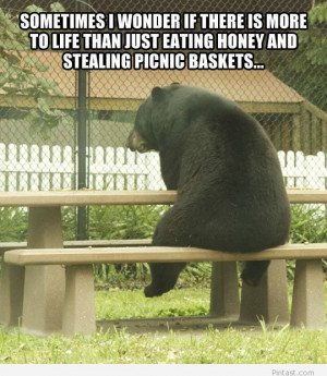 Funny bear quote 2014