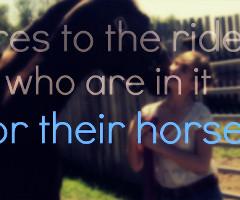 Horse Quotes Tumblr 25mediatumblrcom