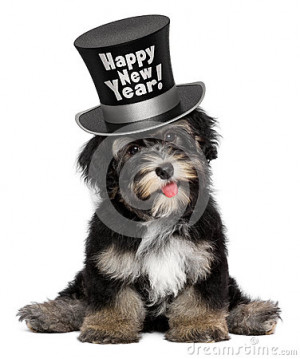cute-havanese-puppy-dog-wearing-happy-new-year-top-hat-smiling-black ...