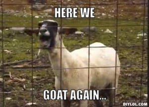 Resized_screaming-goat-meme-generator-here-we-goat-again-e611e6