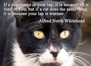 ... cat does the same thing,it is because your lap is Warmer.cat quotes