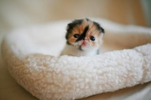 ... tiniest, most adorable baby kittens made (makes) our morning. Enjoy