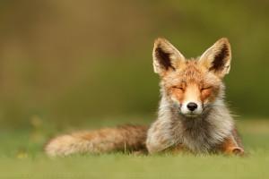 10 Exquisite Photographs of Wild Animals