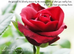 sayings, sayings wallpapers, beautiful quotes wallpapers, rose quotes ...