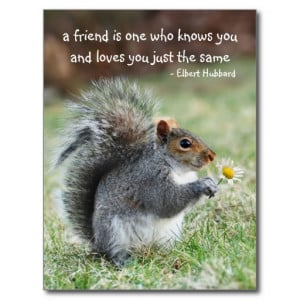 Smiling squirrel Friendship Quote Postcard