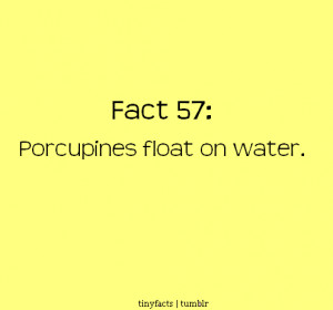 Porcupines float on water | Fact Quote