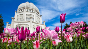 ... Abyss Explore the Collection Temples Religious Baha'i Temple 509342
