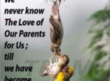 quotes missing your parents quotesgram