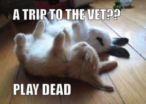 November 7, 2012   No Comments »   Topics: Animals , Funny Pictures