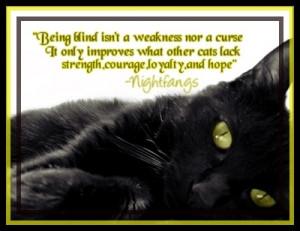 ... warrior cat sayings warrior cat sayings top 10 saddest warrior cat