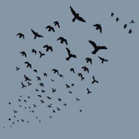 Birds-In-Flight-T-Shirt-%288042%29.jpg