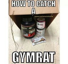 gym rat more gymrat 101 funny pics motivation quotes fitmotivation gym ...