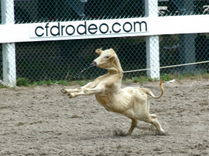 Calf Roping Quotes (a calf is jerked down at the
