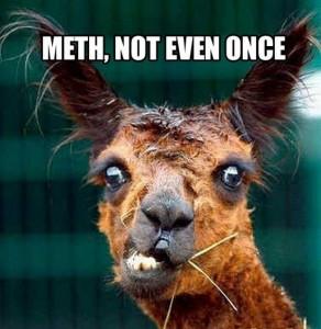 funny-looking-llamas2 meth