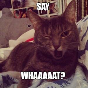 Say Whaaaaat Cat