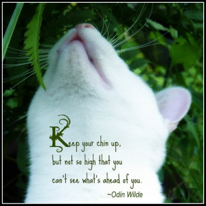 Pet Quotes I Love 2