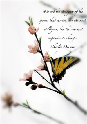Butterfly Quotes (36)
