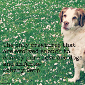 Mean Dog Quotes