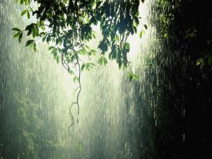 Most Beautiful Rain Photos
