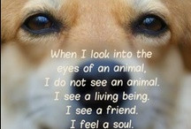Animal Compassion Quotes / by julie jordan