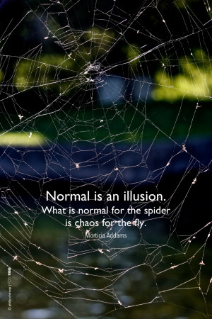 """is normal for the spider is chaos for the fly.""""   Morticia Addams ..."""
