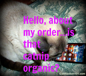 Tagged cat-comments-connection-communication , cell phone-cat-funny ...