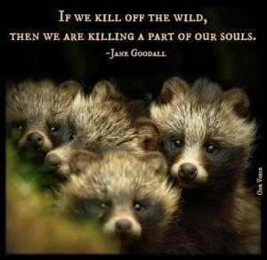 Jane Goodall Quotes About Animals Jane goodall. via birdee lee