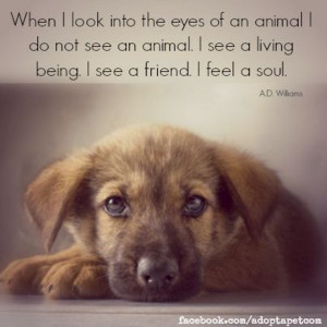 Inspirational Animal Rescue Quotes Pinned by adopt-a-pet.com