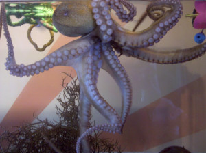 Octopus: The underwater