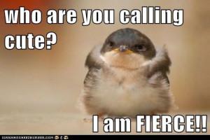 Who are you calling cute? I am fierce!