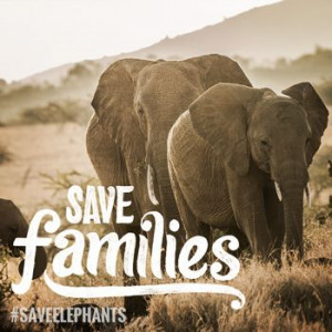 Join the Herd! Help TNC save Elephants!
