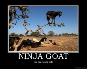 Never safe, ninja goat