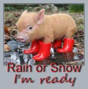 Rain or Snow im ready