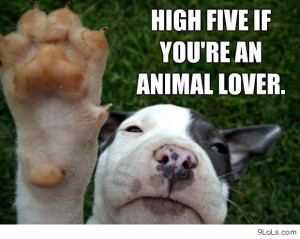 sayings all you need is love and a dog agreed funny quote with ...
