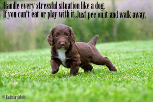 Quotes and Pics 64, A dog is a man's best friend