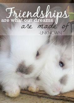... Sweet Binks Rabbit Rescue in Rhode Island! Such cute bunny friends