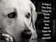 ... Best Friends, Quotes, Pets, So True, Fur Baby, Furries Friends, Animal