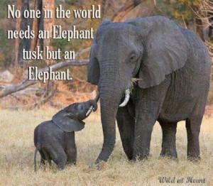 Elephants are amazing.