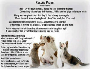 ... animals in the world please rescue an animal rather than buying one