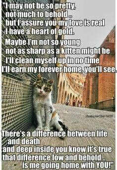 one help Adoption, Stop Animal Abuse, and Adopt Stray Pets!!! Animals ...