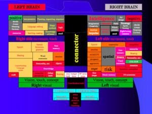 The Left Brain / Right Brain Business.