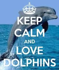 ... more dolphins tales dolphins privacy calms but calm photos calm quotes