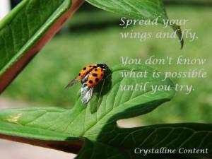 ... quotes #art: Picturequotes Ladybugs, Picture Quotes, Quotes Art, Quote