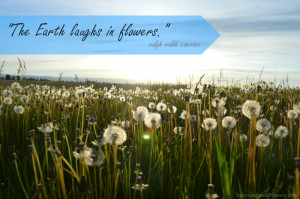 ... // Find other nature quotes at http://belongwithwildflowers.com