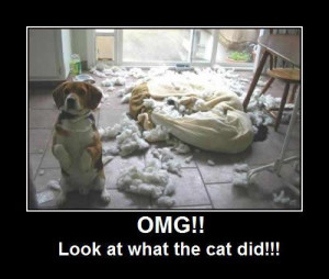 Tag Archive: funny beagle pictures