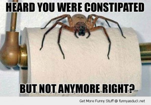 constipated spider toilet roll insect funny pics pictures pic picture ...