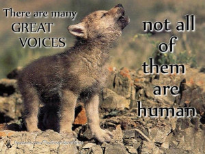 native american quotes about wolves | Voices | Penspen's Blog