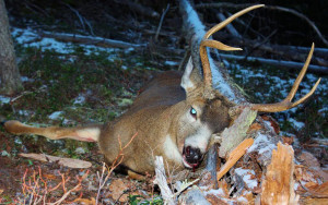 Good Luck Deer Hunting Quotes Scouting so good luck next